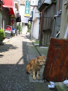 赤線地帯/猫.JPG